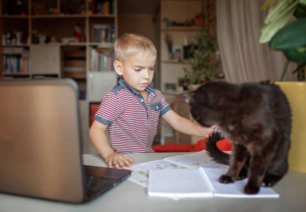 Distant education true online education schoolchild studying with cat picture id1281101447?b=1&k=6&m=1281101447&s=612x612&w=0&h=qcbc uix10d5sestnmvttrksxplx z  qfwtosd3t8w=