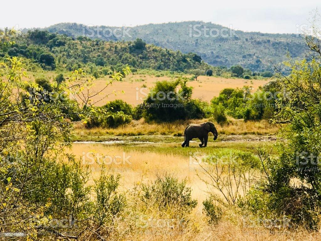 Distant Elephant zbiór zdjęć royalty-free