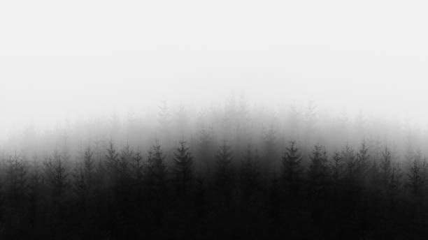 distant forest in black and white and copy space stock photo