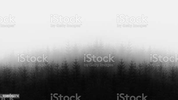Photo of distant forest in black and white and copy space