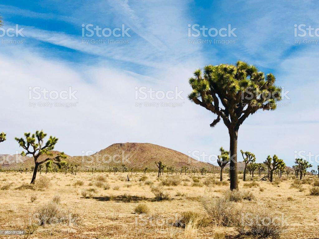 Distant Mountain zbiór zdjęć royalty-free