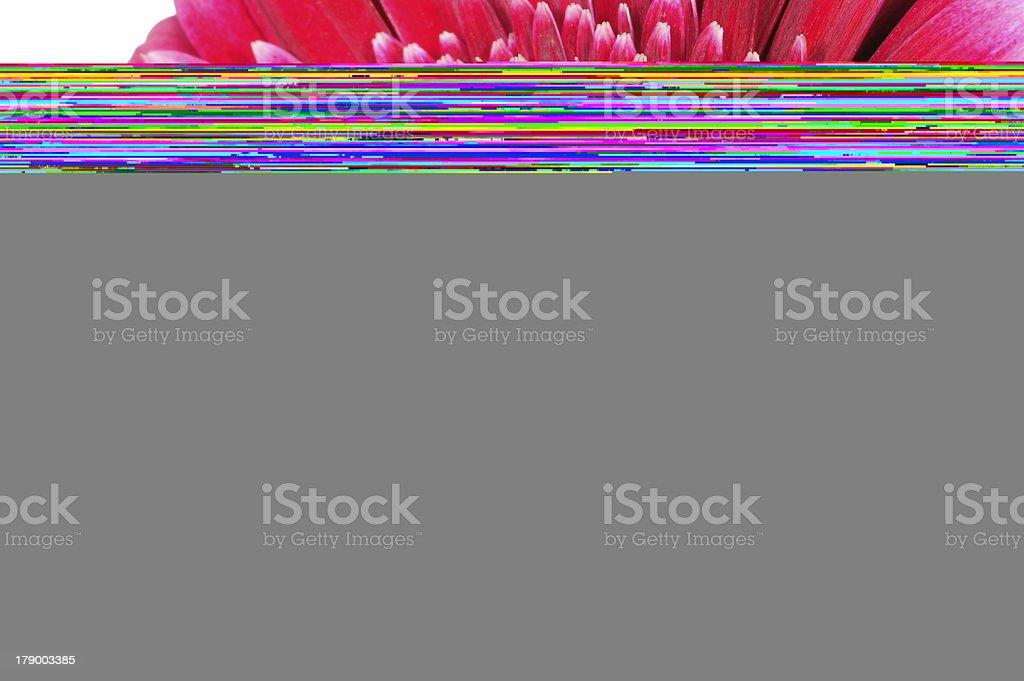 Distel stock photo