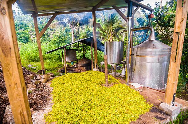 destillierapparat, aromaöl/alambic artisanal, huile essentielle, ylang, mayotte - destillationsturm stock-fotos und bilder