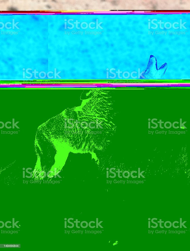Distorted image showing coyote howling stock photo