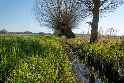 Ditch and willow tree in the wet meadows of the Bünde district of Hüffen in East Westphalia.
