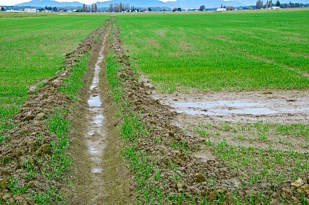 Top Drainage Landwirtschaft - Bilder und Stockfotos - iStock #SM_24