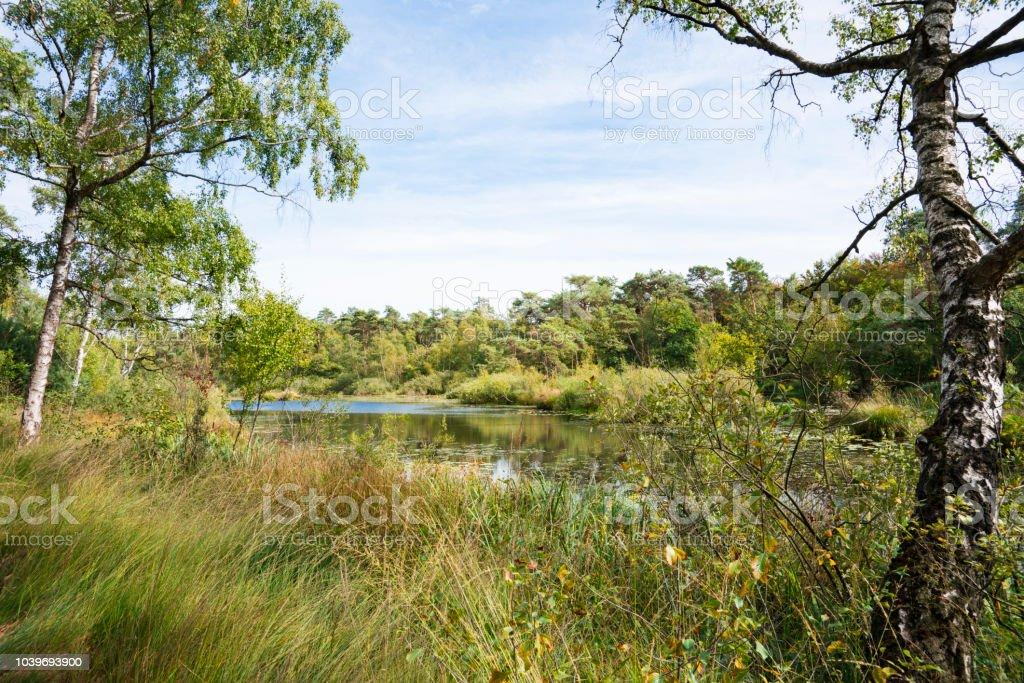 Ditch landschap in nationaal park Oisterwijkse Vennen, Nederland foto