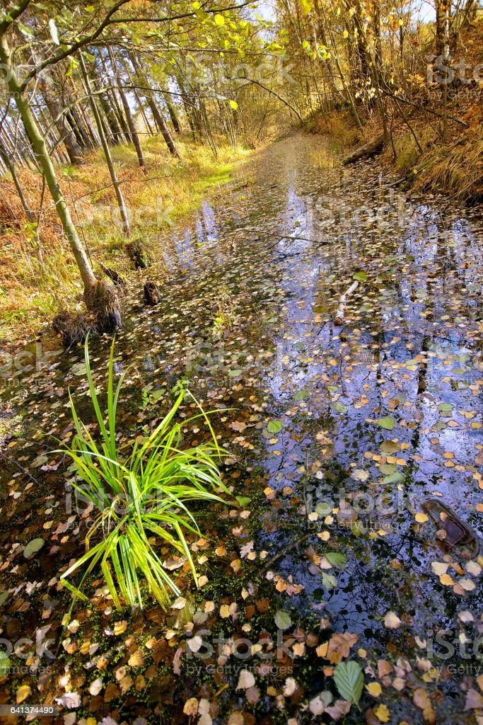 Ditch with water with fallen leaves in the wood. стоковое фото