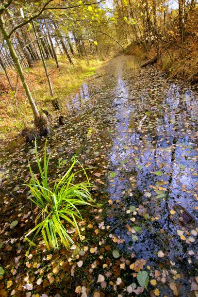 Cтоковое фото Ditch with water with fallen leaves in the wood.