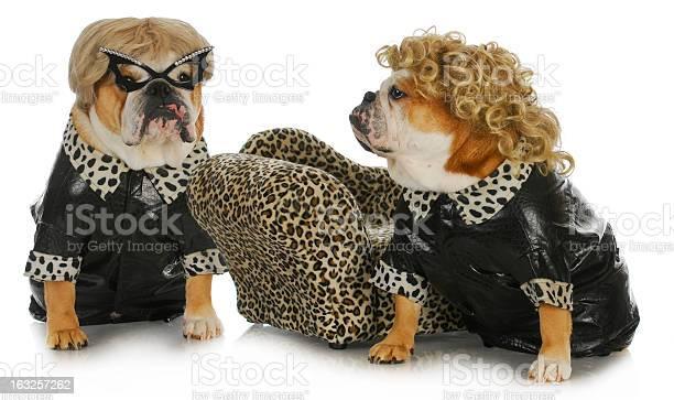 Diva dogs picture id163257262?b=1&k=6&m=163257262&s=612x612&h=narcgxyrfaelktvvovtr49c 8gurumoqhuqgwifj2fa=