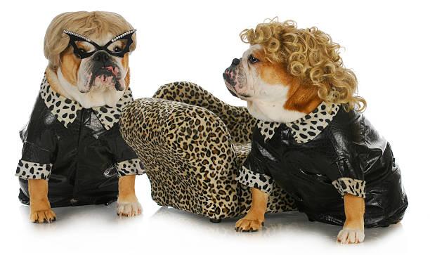 diva dogs stock photo