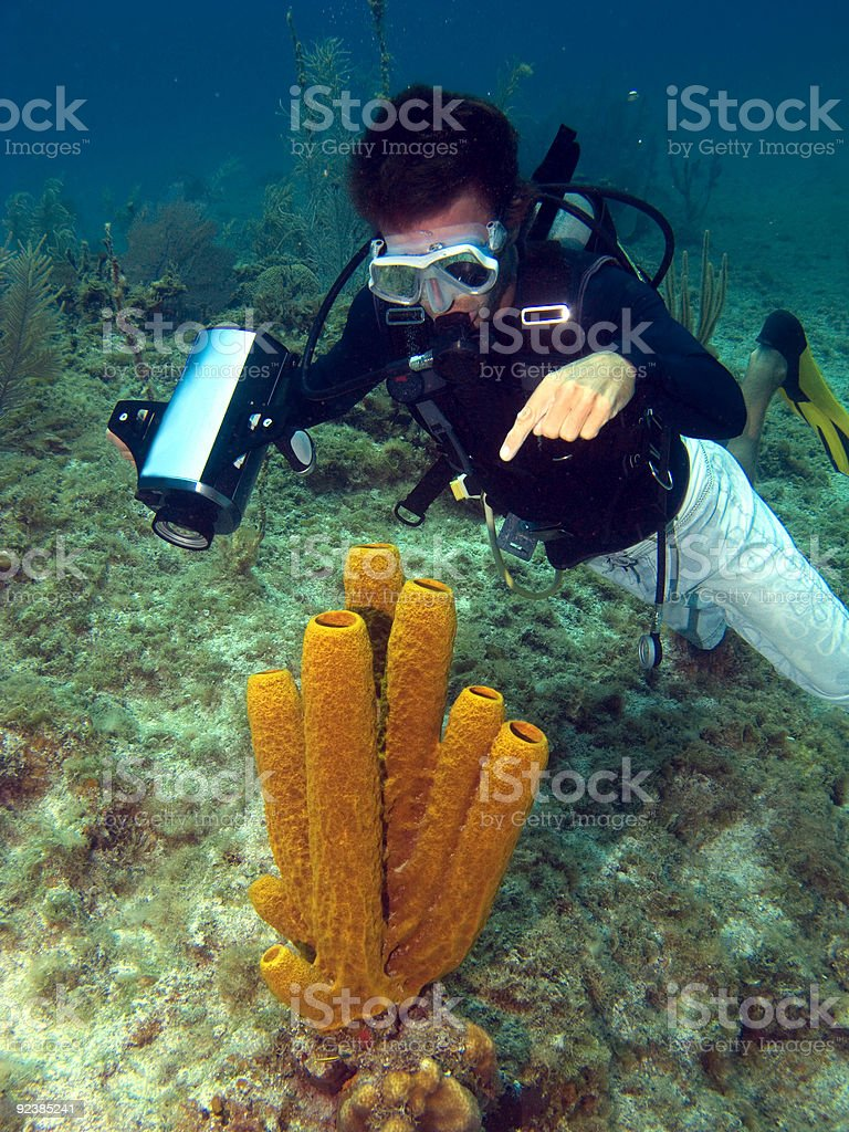 Dive Master pointing at a Sea Sponge royalty-free stock photo