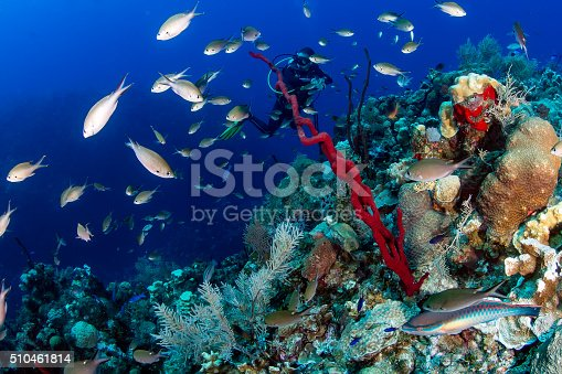 SCUBA diver swimming on a colorful tropical coral reef