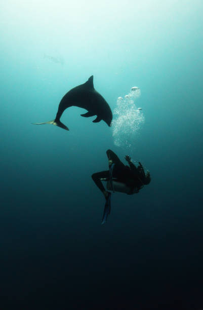 Diver and a dolphin stock photo