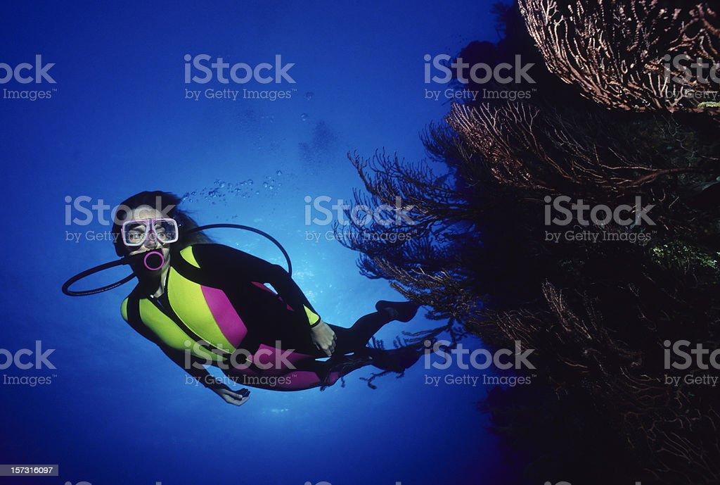 Taucher und Koralle – Foto