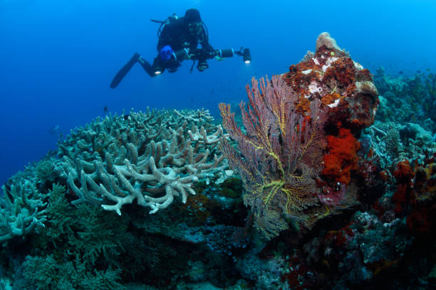 Diver and corals, Great Barrier Reef, Australia
