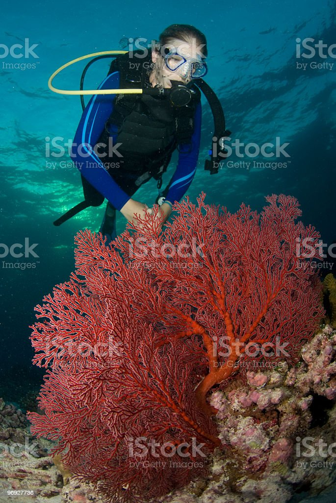 diver and fire coral royalty-free stock photo
