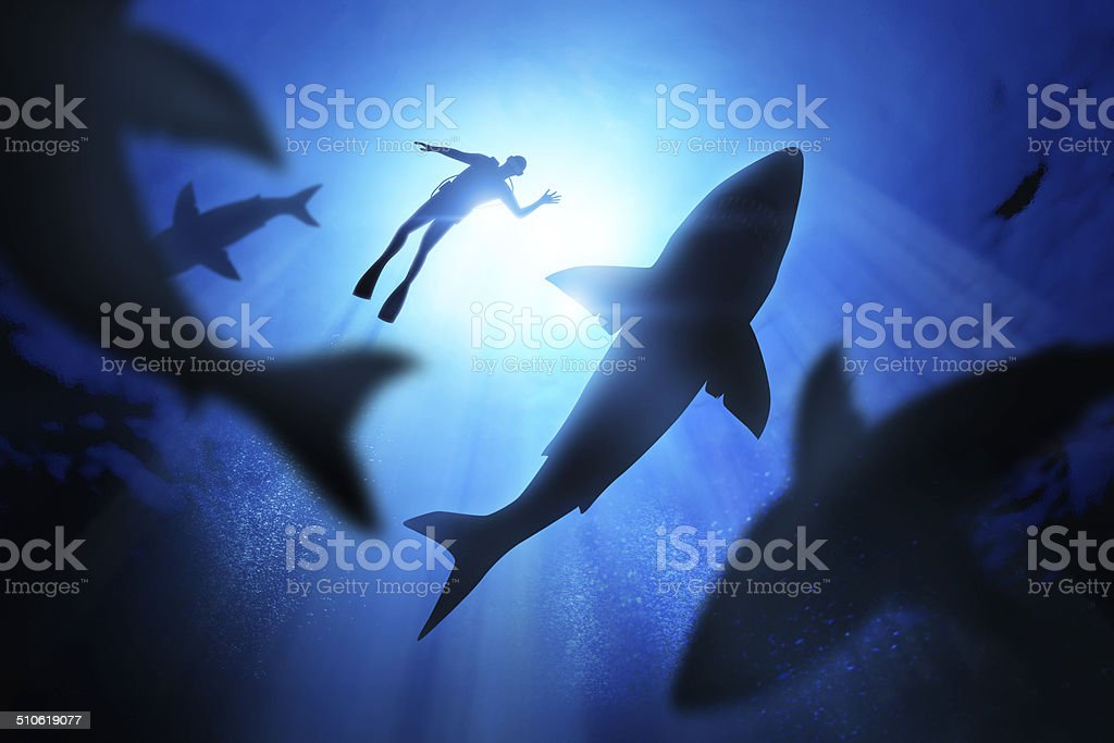 Diver And Great White Sharks stock photo
