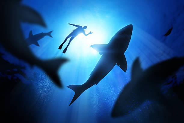 sommozzatore e squali bianchi - squalo foto e immagini stock