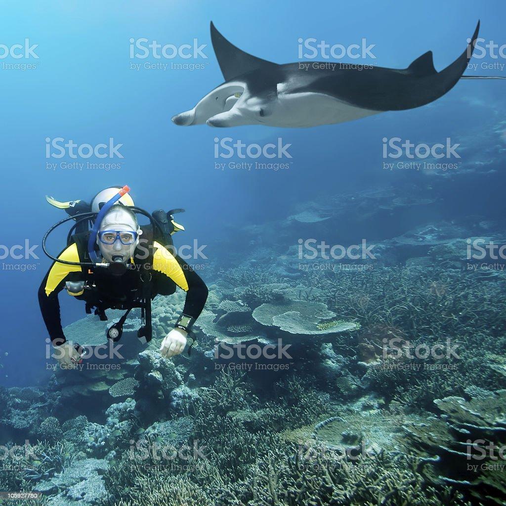Diver and manta royalty-free stock photo