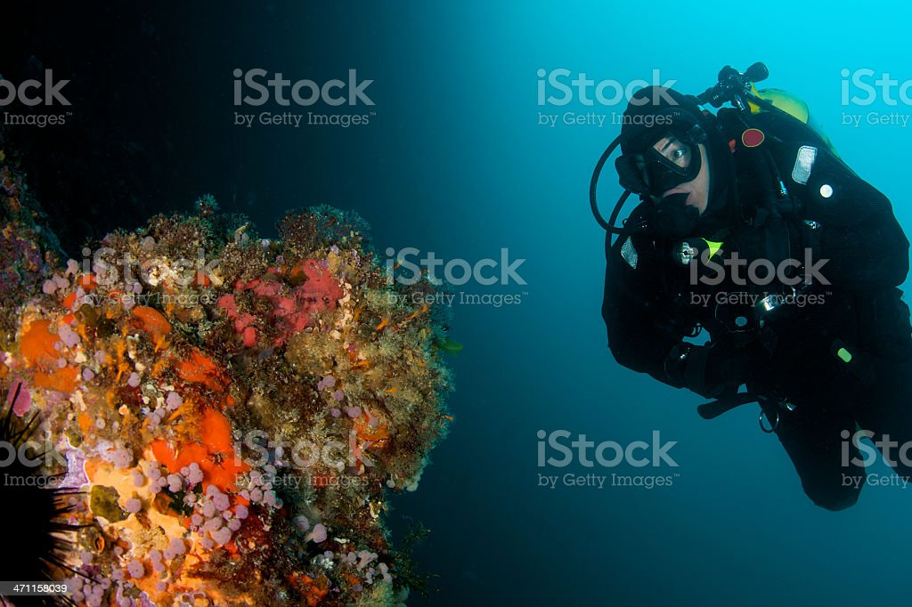 Diver and reef stock photo