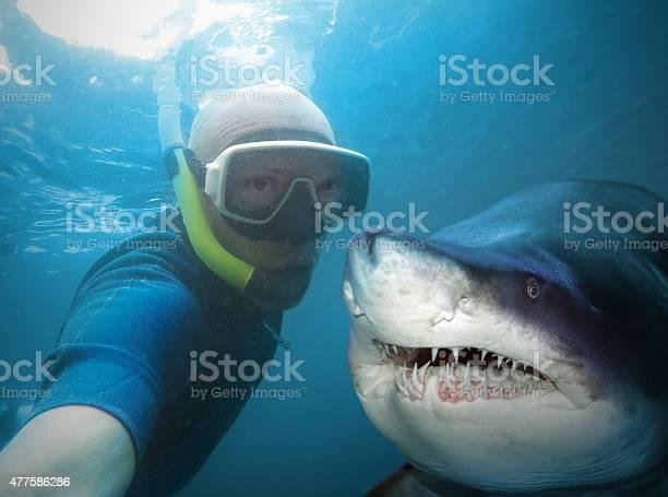 Diver and shark picture id477586286?b=1&k=6&m=477586286&s=612x612&h=cyz2y1mpbzapa8fxhtlgiyt9mu5qou4nbdywvicsjli=