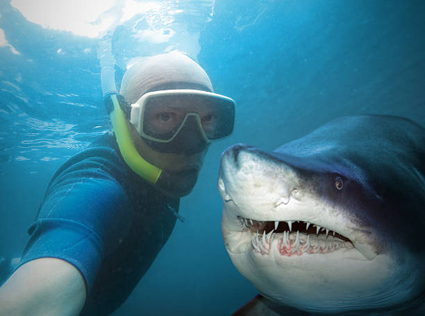 diver and shark. - underwater diving stock photos and pictures