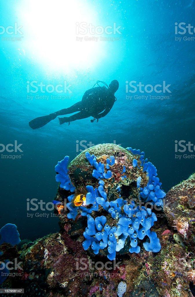 Diver and sponge stock photo