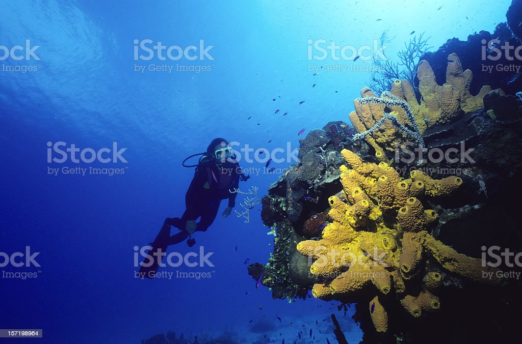 Diver and Yellow Sponge royalty-free stock photo