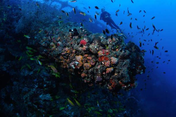 diver exploring the ss yongala shipwreck, townsville, great barrier reef, australia - artificial reef stock pictures, royalty-free photos & images
