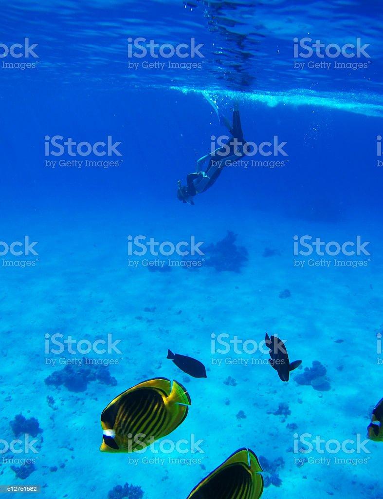 Diver in Deep Blue Sea. Go pro camera shot