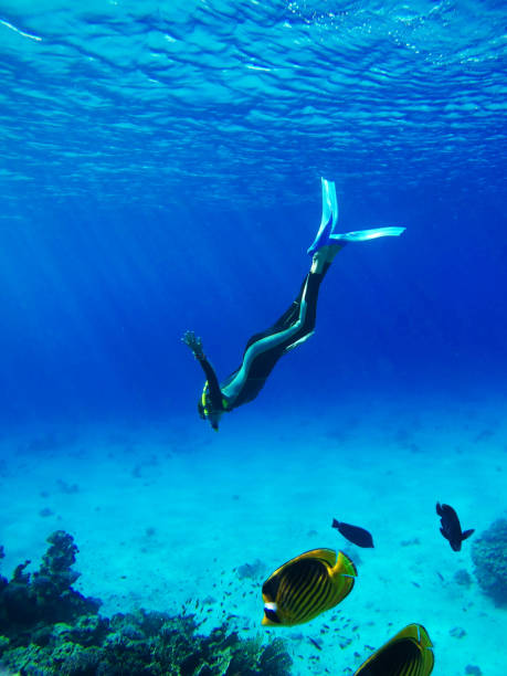 Diver in Deep Blue Sea Diver in Deep Blue Sea. Go pro camera shot free diving stock pictures, royalty-free photos & images