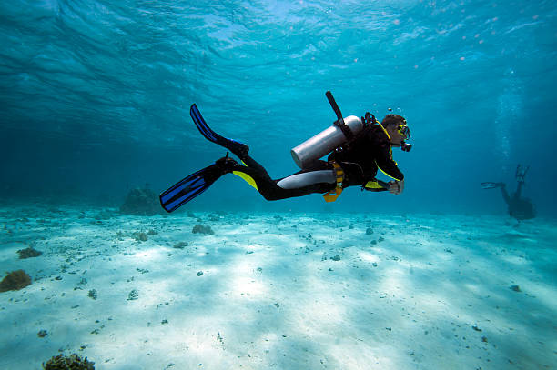 diver in shallow water - underwater diving stock photos and pictures