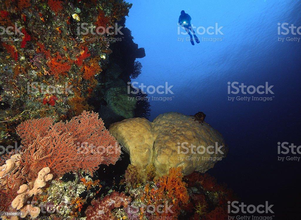 Diver in the Banda Sea stock photo