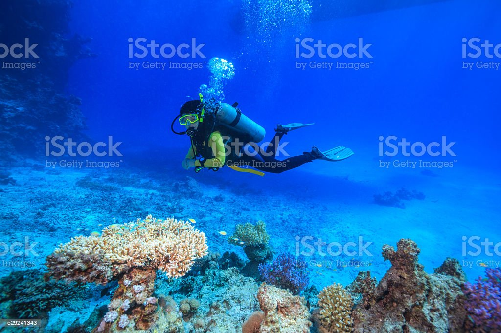 diver in the Red Sea stock photo