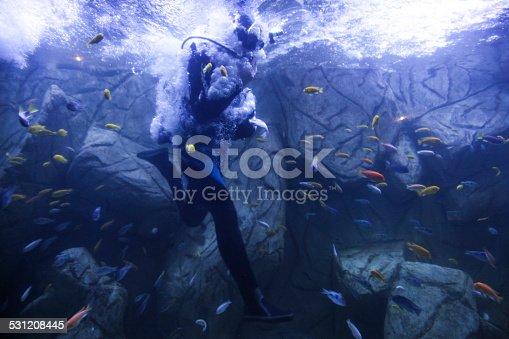 177281231istockphoto diver jump 531208445