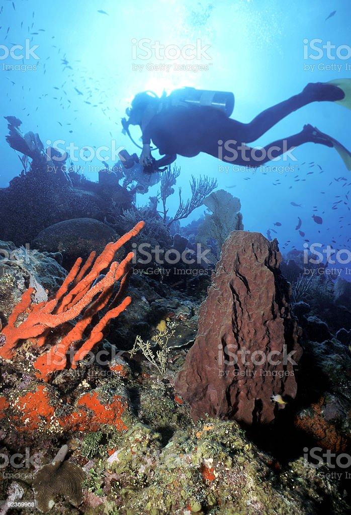 Diver n Red Finger Schwamm Lizenzfreies stock-foto