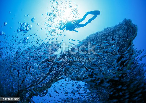 1037450870 istock photo Diver next to coral 512594782
