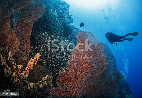 1037450870 istock photo Diver next to coral 512620676
