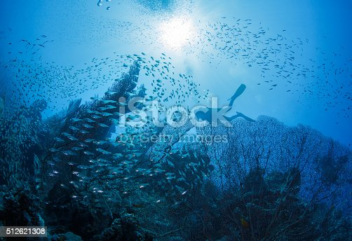 1037450870 istock photo Diver next to coral 512621308