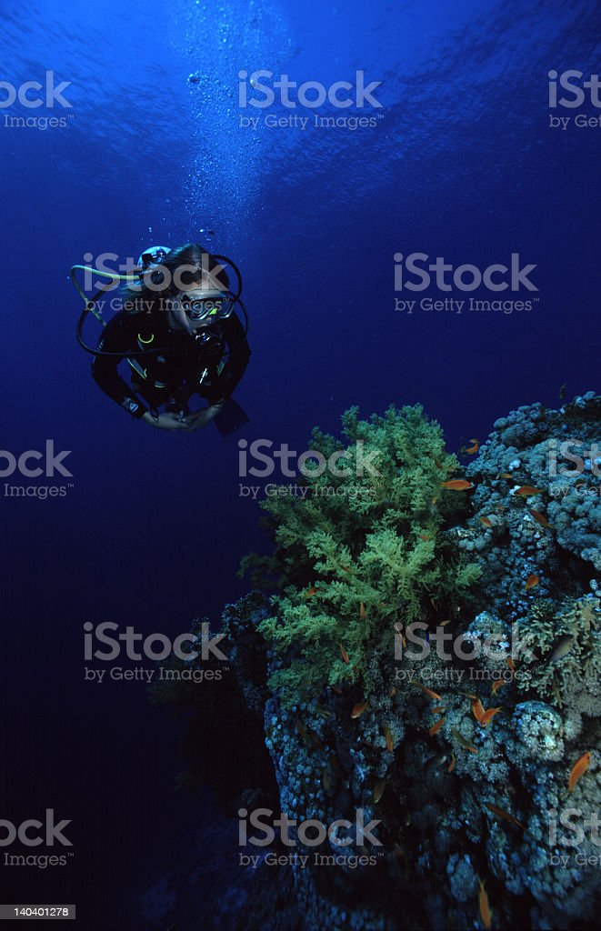 Diver on a coral reef stock photo