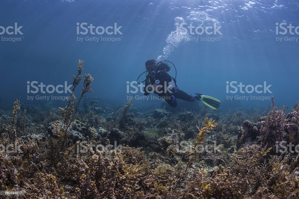 diver on a healthy reef royalty-free stock photo