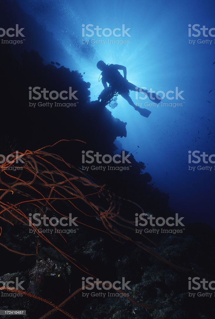 Diver on Red Whip Reef royalty-free stock photo