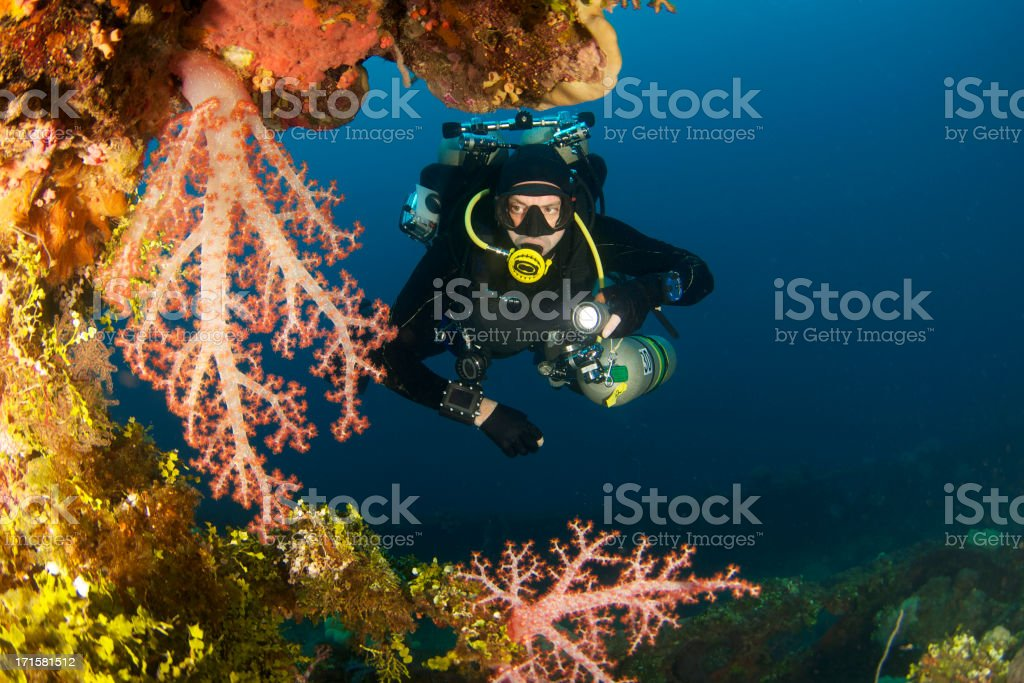 Diver on reef covered wreck stock photo