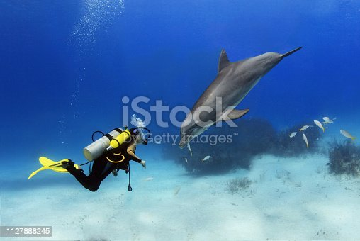 A scuba diver plays with a dolphin.