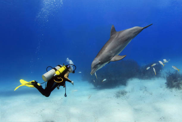 Diver plays with a posing dolphin stock photo