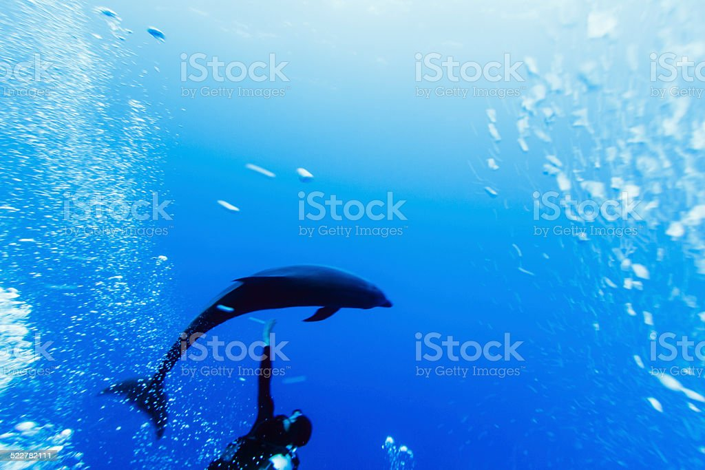 Diver Reaching Out to Touch Dolphin in Rangiroa, French Polynesia stock photo