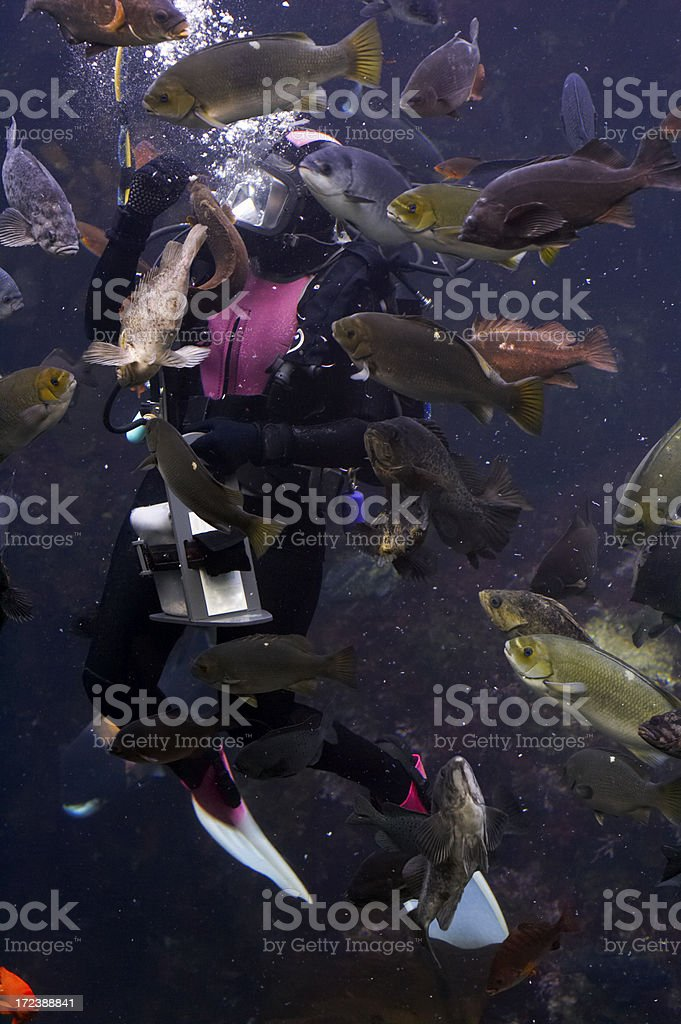 SCUBA diver surrounded by fish stock photo