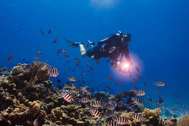 Diver swimming next to the reef with his torch shining stock photo