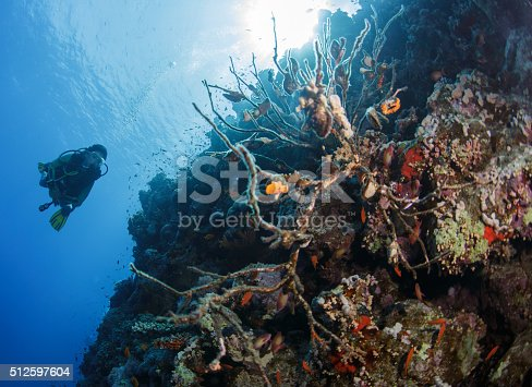 1037450870 istock photo Diver swims in a Red Sea 512597604